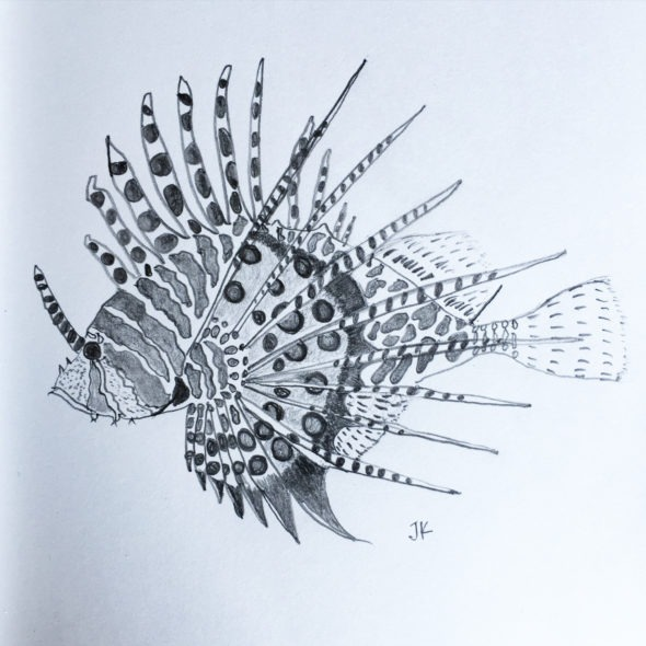 Spotfin Lionfish in pencil